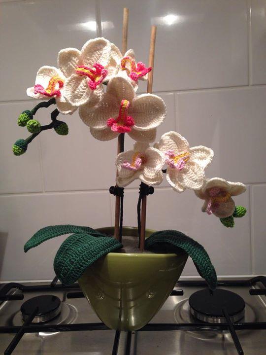 orchidee - kooppatroon