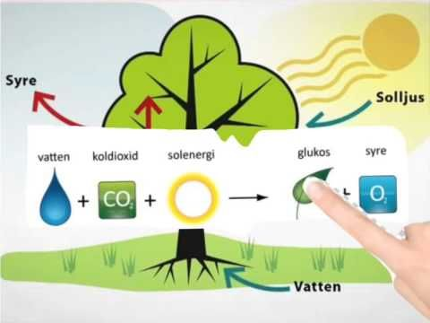 Fotosyntes frokenMC - YouTube
