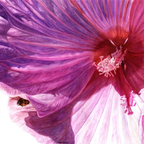 14 best hibiscus images on pinterest botanical art botanical close up hibiscus meewha lee ccuart Image collections