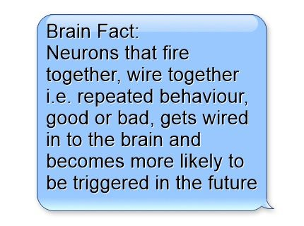 9d7a3e19bc33590f666ac79290a24cf0--brain-facts-neurons.jpg