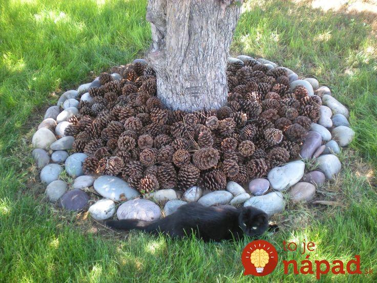 Vedeli ste, že šišky sú veľmi praktickou pomôckou v záhrade?