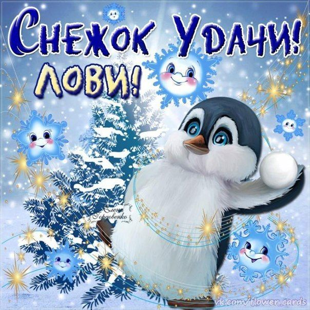Днем, пожелания доброго дня в картинках прикольные и смешные зимние