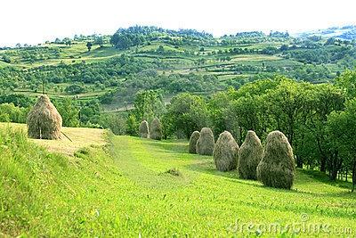 Hay stacks, Maramures region, Romania.