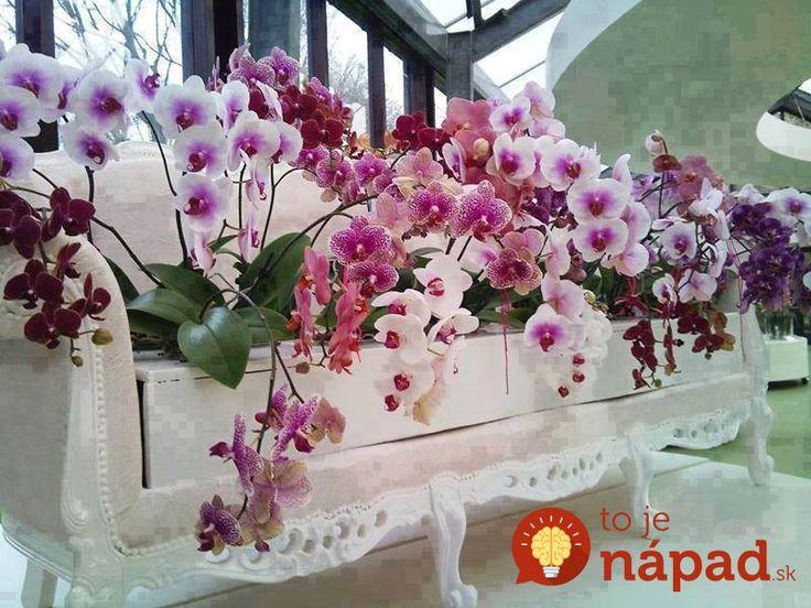 Ke� orchidea kvitne, je to skuto�n� n�dhera a pastva pre o�i. �o v�ak treba robi� v obdob�, kedy rastlina nekvitne a ako ur�chli� n�stup novej sez�ny kvitnutia?