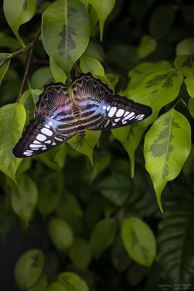 Hang Over By Norbert Liesz 500px In 2020 Schmetterling