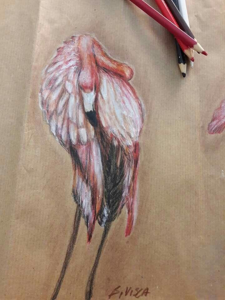 Barbara Visca #flamingo #pink #fenicottero #rosa #barbaravisca #drawing #sketch