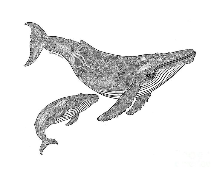 Whale Drawing - Humpback And Calf by Carol Lynne