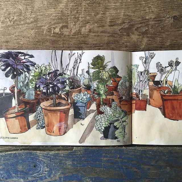 Wil Freebown // Succulents // sketchbook // colors