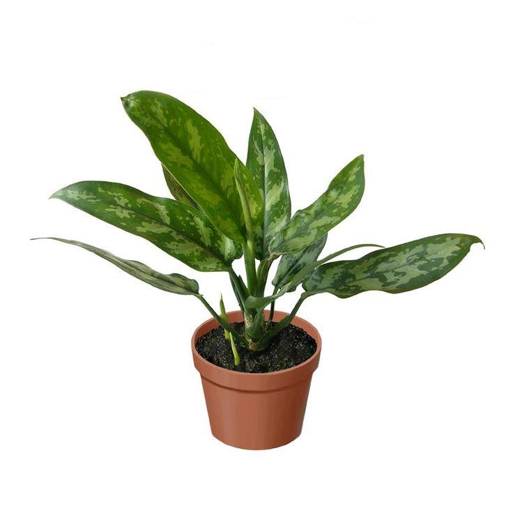 Le migliori 5 piante che purificano l'aria dallo smog ...