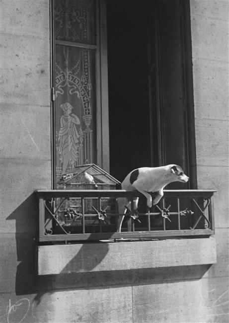 """""""[Le chien concierge]"""". Charenton-le-Pont, Médiathèque de l'Architecture et du Patrimoine - Photo (C) Ministère de la Culture - Médiathèque du Patrimoine, Dist. RMN-Grand Palais / André Kertész"""