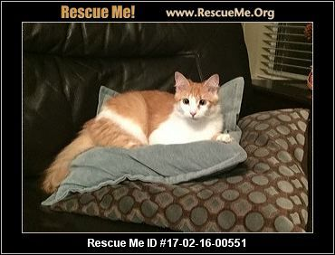 ― California Norwegian Forest Cat Rescue ― ADOPTIONS ― RescueMe.Org