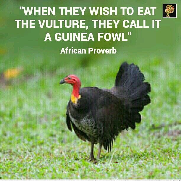 Could you tell whether the animal in the picture is a guinea fowl or vulture? My guess is, even if you answered correctly ( guinea fowl) it took you some head scratching to get the answer. Well, our elders in Africa know how the two can look  alike. But what really does this proverb mean? You might have come across people or perhaps you are one of those people whom when they want to do the wrong thing or want to do some thing their conscience does not agree with, they try to justify it in a…