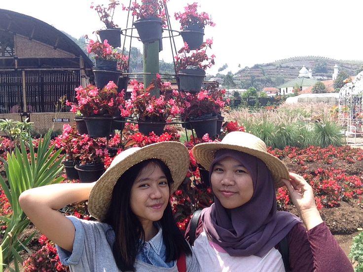 Kebun Bunga Begonia, Lembang Indonesia