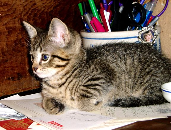 Olivia's kitten Tiger (who was modeled after our Cleo, now in Kitty Heaven.)