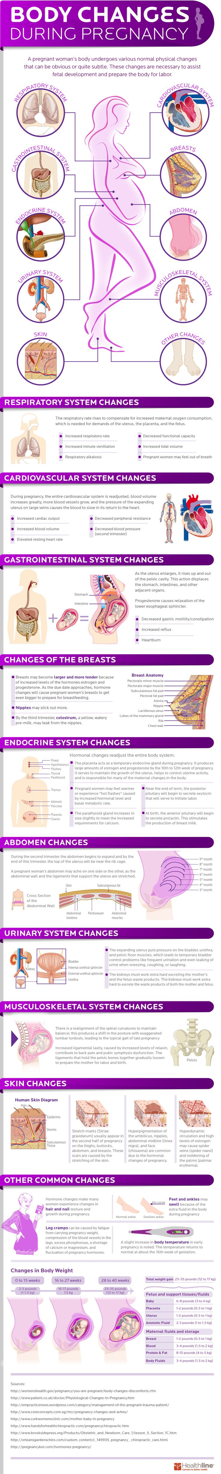 This infographic covers all of the changes that take place throughout the body during pregnancy.