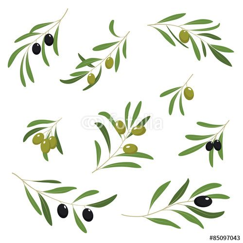 Вектор: Illustration With Green and Black Olives