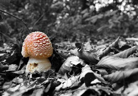 Amanita Muscaria #nature #piemonte #italy #provinciadicuneo