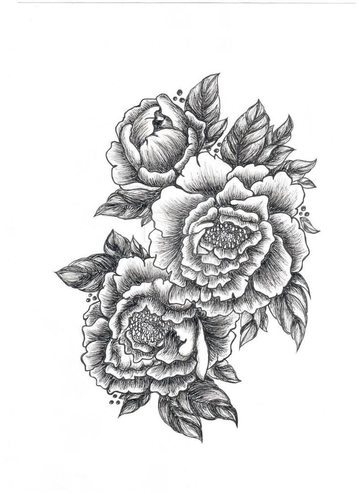 scientific peony illustration - Google Search | Flower tattoo shoulder, Peony drawing, Tattoos