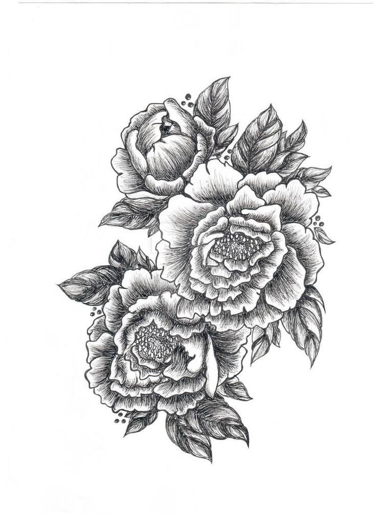 scientific peony illustration Google Search Flower