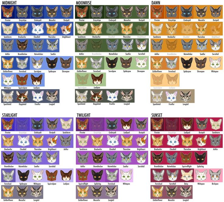 188 Best Warrior Cats Images On Pinterest