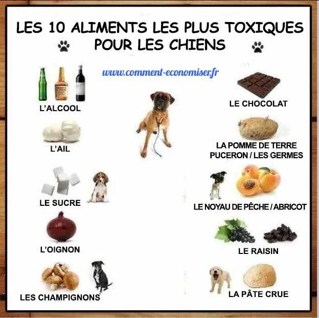 Certains aliments sont dangereux pour ces petites boules de poils.  Et vu leur gabarit, il suffit parfois de pas grand chose pour les intoxiquer.  Voici donc la liste des 10 aliments les plus toxiques pour les chiens.   Découvrez l'astuce ici : http://www.comment-economiser.fr/10-aliments-toxiques-chien.html