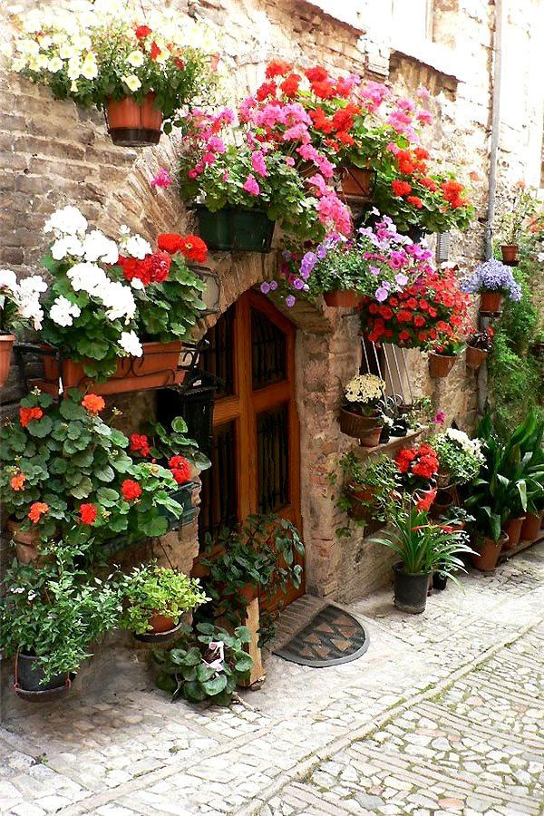 Flowers in Spello, Perugia, Italy