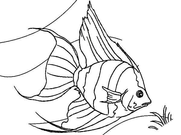 Coloring Book Angel Fish Coloring Pages