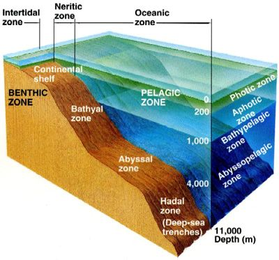 Deep Sea ocean zones--LOTS of information and COOL videos! research / ecology / geology....