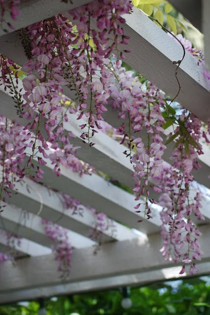 MUST have for my dream house: Wisteria covered pergola
