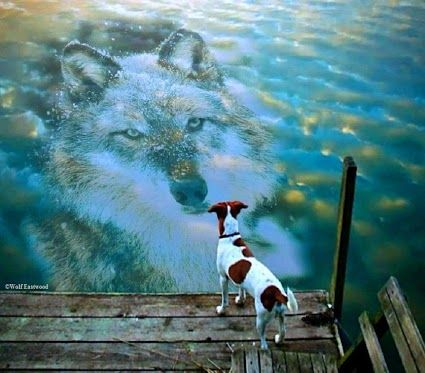 reflection - so how can one eat wolf as other countries ...