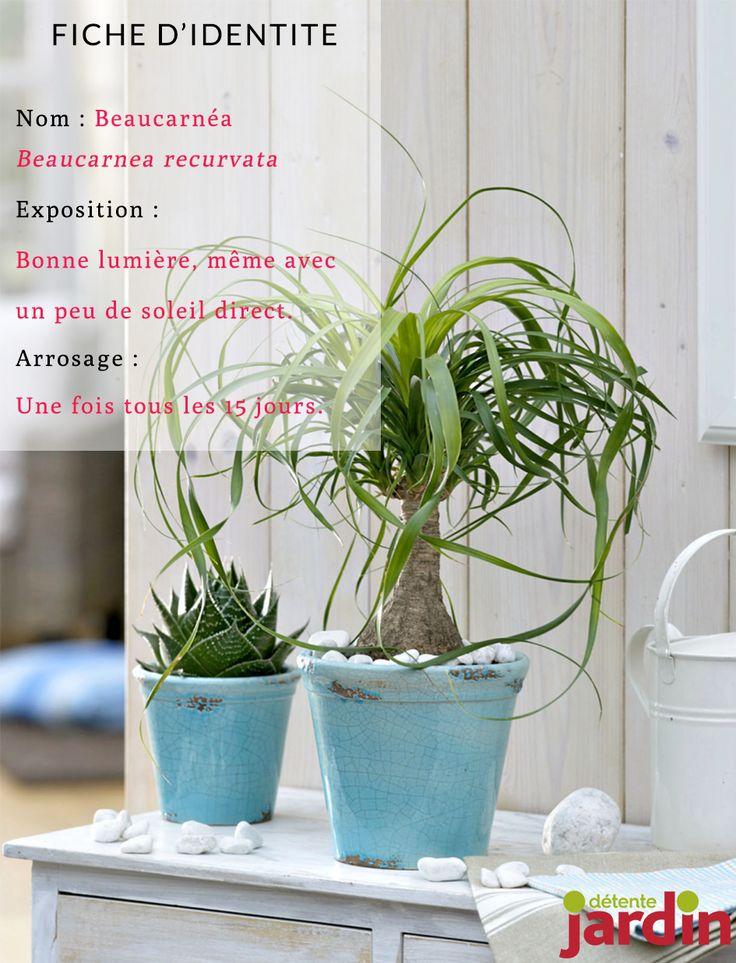 les 236 meilleures images du tableau plantes d 39 int rieur sur pinterest plantes d 39 int rieur. Black Bedroom Furniture Sets. Home Design Ideas