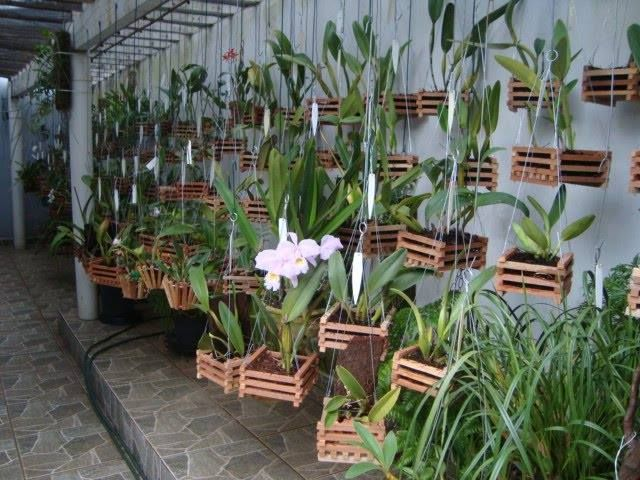1099 best orchid care and growing images on Pinterest ...