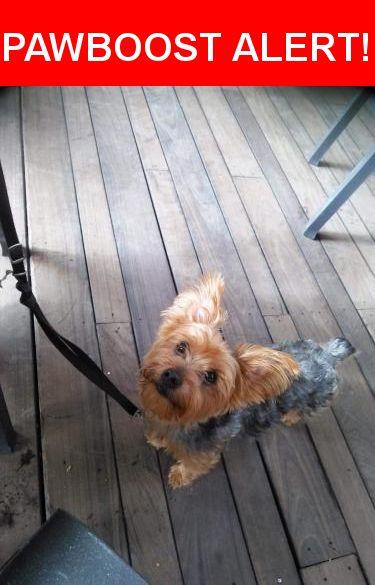 Please spread the word! Max-griffee was last seen in Austin, TX 78702.    Nearest Address: Near E 13th St & San Bernard St