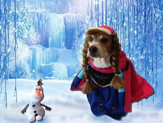 puppies dressed up diesny | This Dog Dressed Up As Disney Characters Is Basically The Best Thing ...