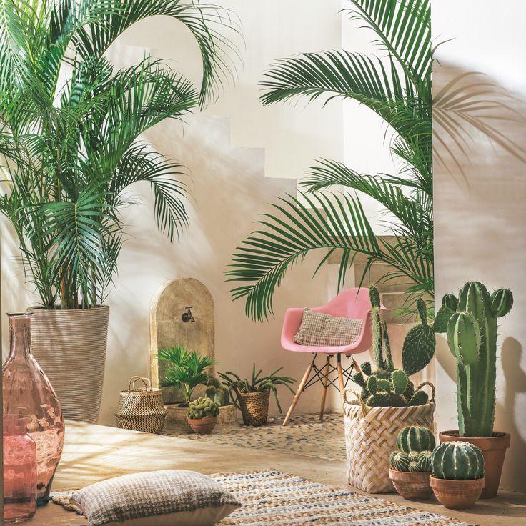 Les pots en matières naturelles accompagnés de grands palmiers et de cactus cariés créent un décor propice au farniente.