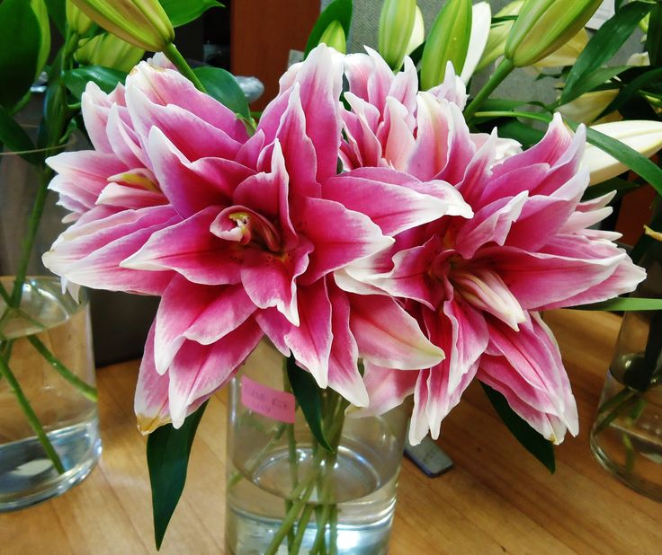 Elena Rose Lily. #CaGrown