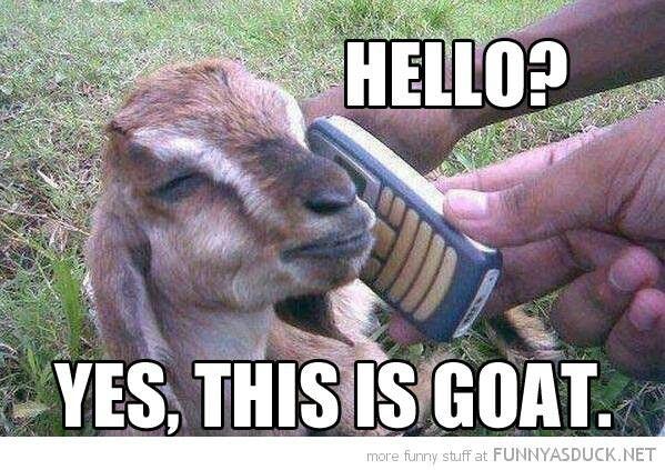 The 25+ Best Funny Goats Ideas On Pinterest