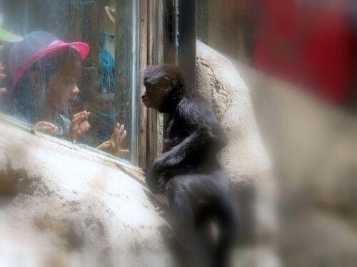 Zoológico Santiago chile