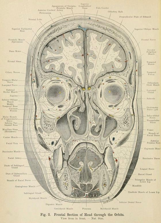 466 Best Vintage Anatomy Images On Pinterest Medical History
