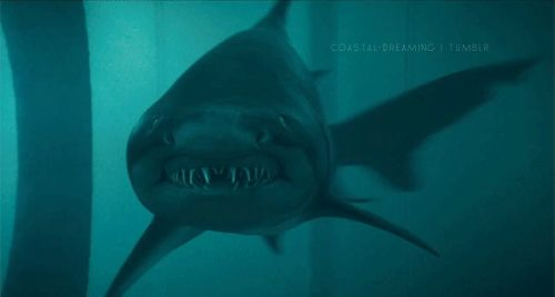 shark gif | 20 GIFs That Prove Sharks Are Actually Satan