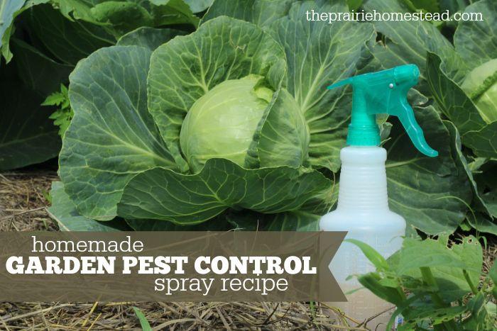 Organic Pest Control Garden Spray Recipe Gardens Homemade And Mice