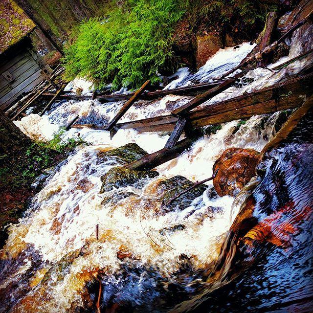 Finnish nature during spring time. Part 7 #finland #nature  #spring #beautiful #suomenkevät #luonto #luontokuva #kaunista #aamu #winled #winledlighting #woodland #metsä #suomi #suomenluonto #kevät #koski #puro #metsäretki #metsässä #mylly #forest #myllykoski
