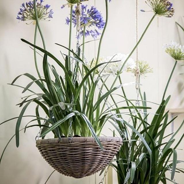Не отличишь от настоящих! #flowers #silk_ka #стабилизированные #цветы #растения #декоративные #идеал_интерьер #арбат