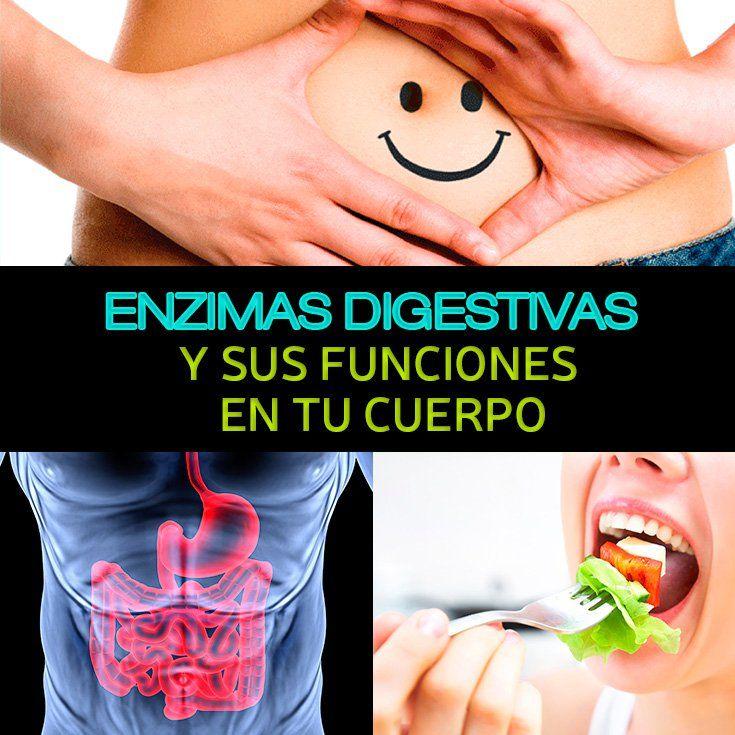 Enzimas Digestivas Y Sus Funciones En Tu Cuerpo - La Guía de las Vitaminas