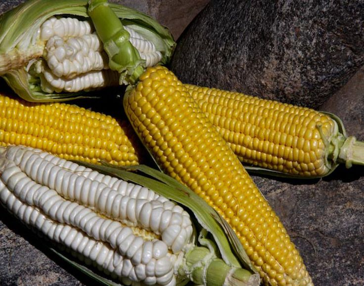The white corn is so much yummier than the yellow