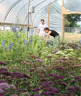 Cut flowers production in high tunnels | Cornell
