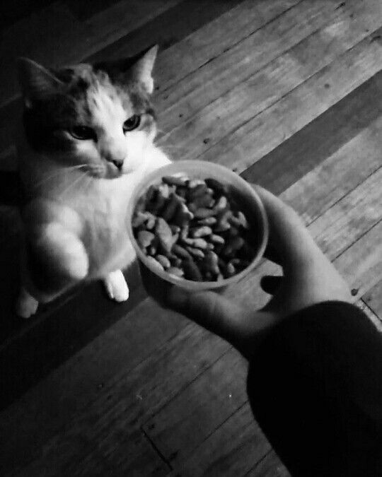 My cat Lola just wants her food!