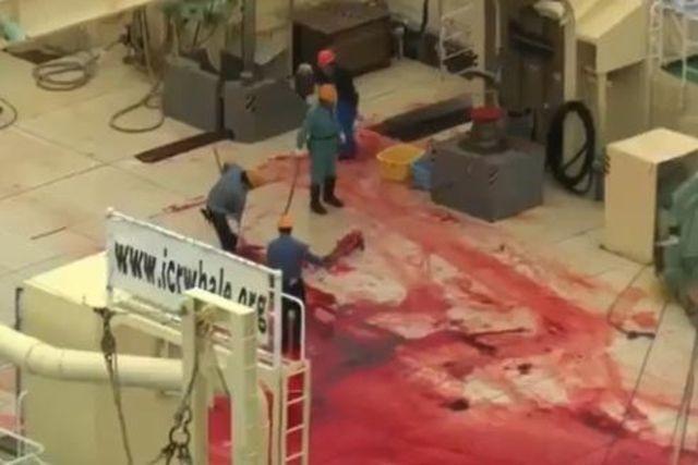 La chasse illégale commence en Antartique... Sea Shepherd attaque !