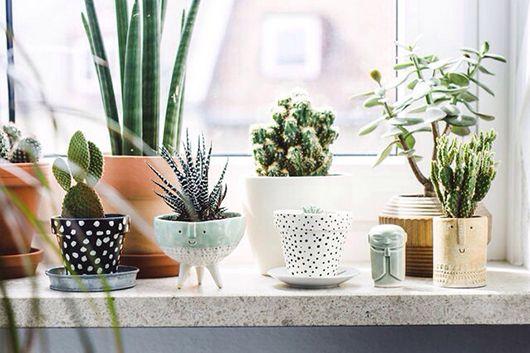 Zimmerpflanzen fürs Fensterbrett