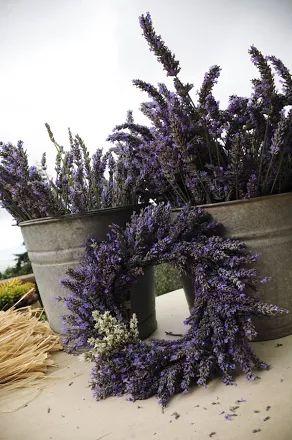 Fotoğraf: A completed lavender wreath. PHOTO CREDIT: Ali'i Kula Lavender/The Maui Book of Lavender.